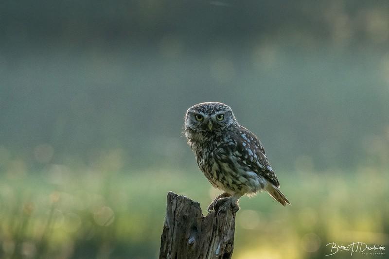 The Little Owl Shoot-6135.jpg