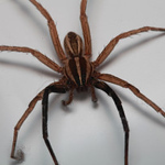 most-spiders-are-not-really-dangerous