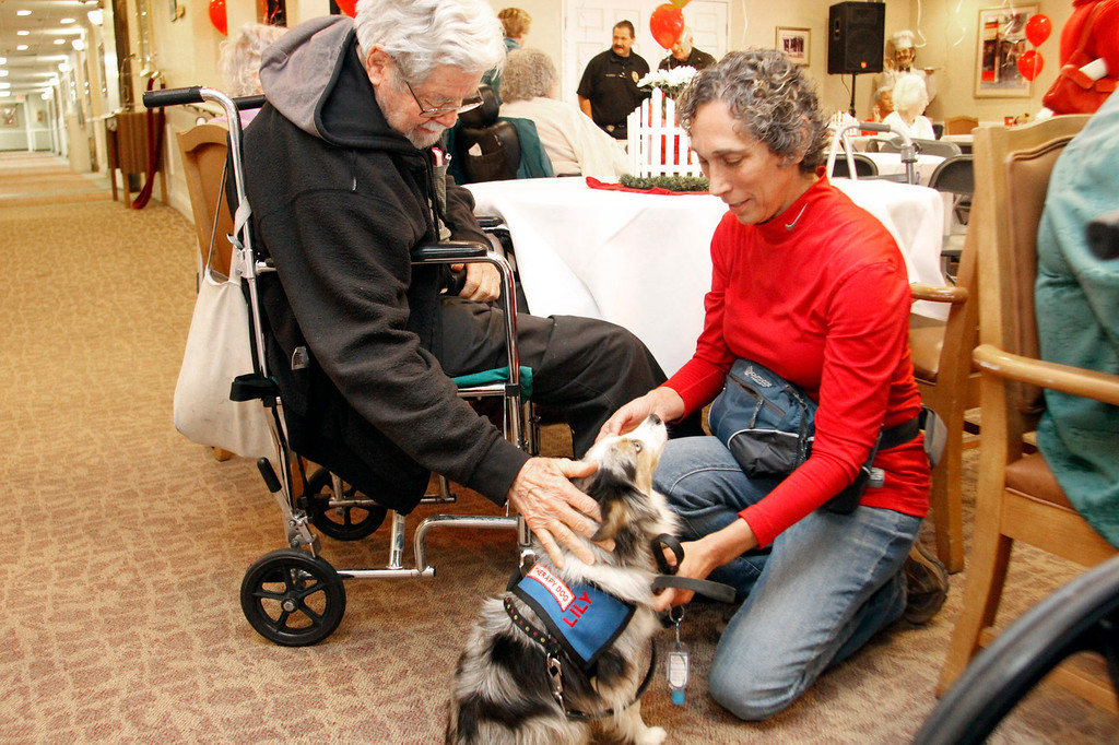 """. Shari Knapstad, right, introduces \""""Lily\"""" to a senior, during the Pet Prescription\'s 10th Anniversary Open House, at Whitten Heights in La Habra, Saturday, March 9, 2013. The organization uses therapy dogs to heal emotional and medical problems, and to hang out with seniors at retirement homes. (Correspondent Photo by James Carbone/SWCITY)"""