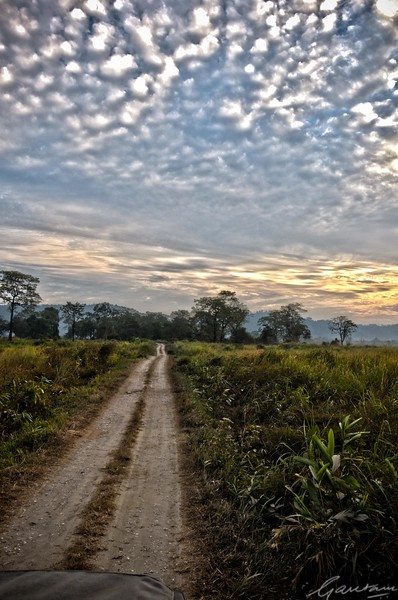 35: Kaziranga Forests (Failed HDR shot) 24 December 2011