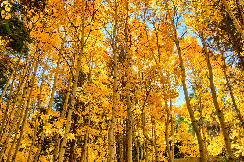 Tall Trees Backlit Luminar_DSC8513.jpeg