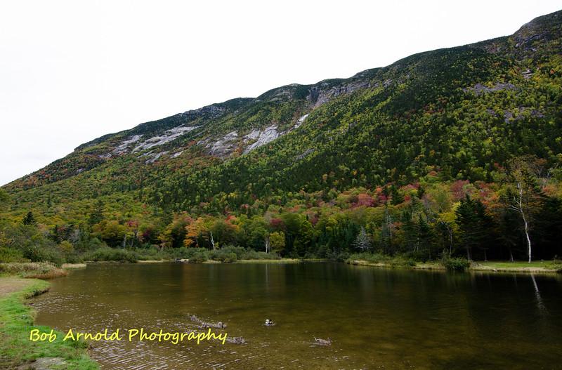 NH Foliage-24.jpg