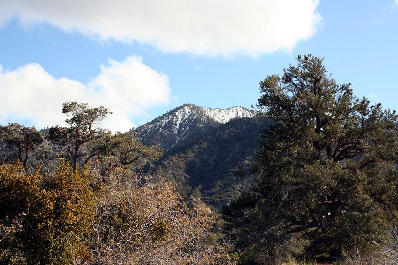 mounyains and trees.jpg