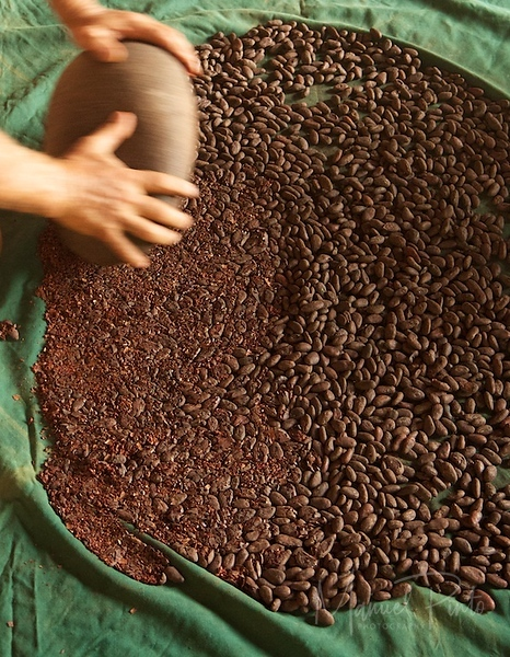 Cacao production
