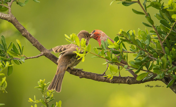Finches feeding_DWL0085.jpg