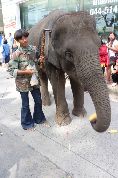 2014-11-14 Surin Elephant Welcome Feast 417.JPG