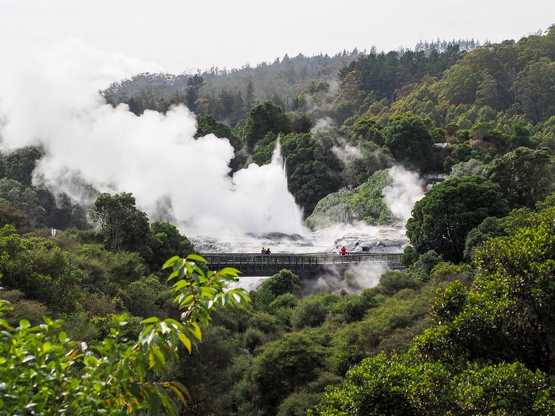 Pohutu Geyser at Te Puia in Rotorua, New Zealand