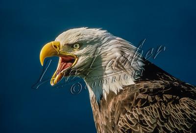 08350 Birds, eagles