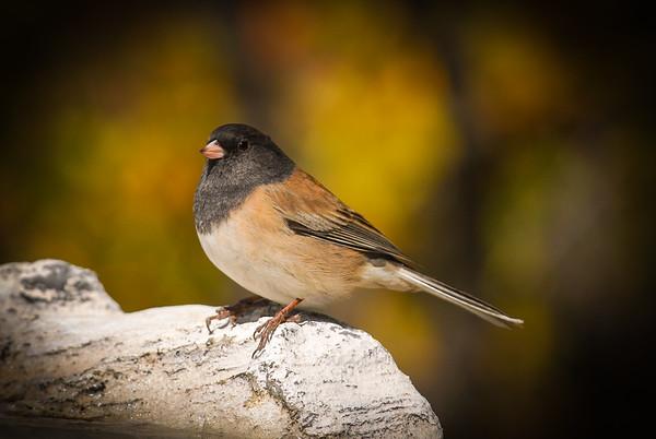 Birds, Etc