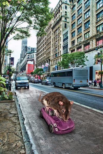 City rat.jpg