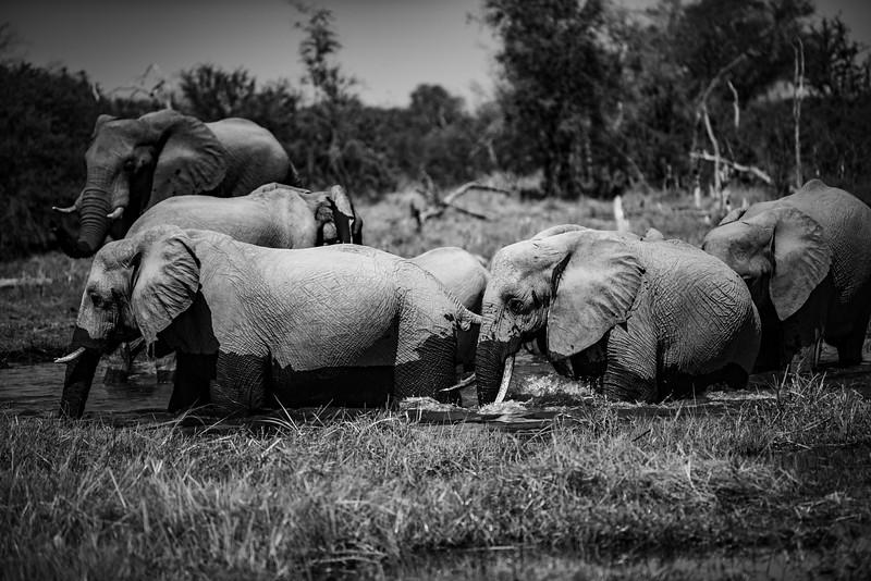 Botswana_June_2017 (3292 of 6179).jpg