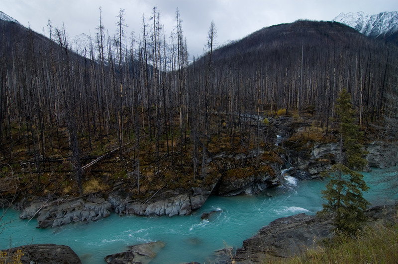 Banff National Park - Rocky Mountains - Burned down Forest