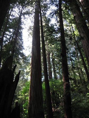 Marin County