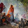 Pilgrims feeding langur monkeys near the fort in Ranthambore national park