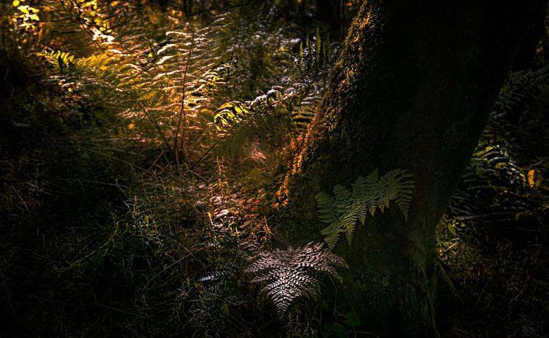 Forest Shadows-122.jpg