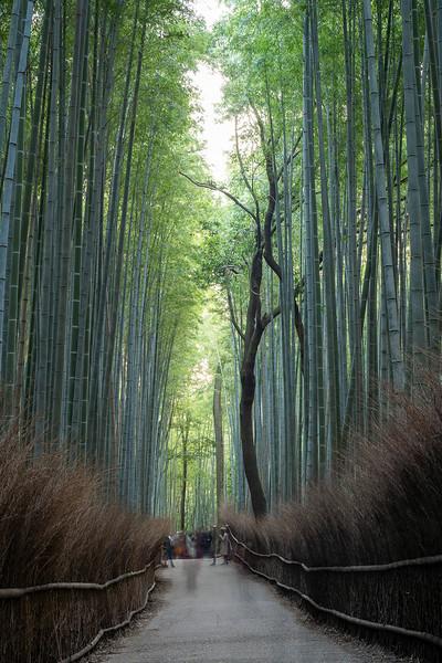 20191115_bamboo_JC-4.jpg