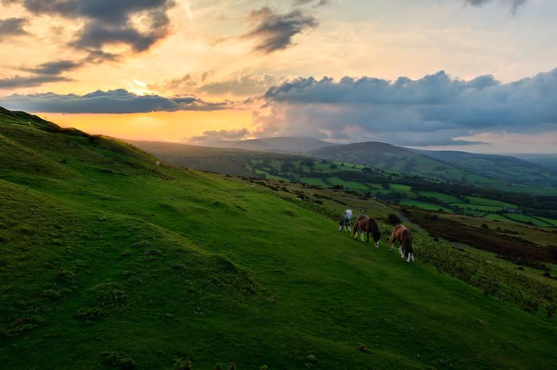 Horses. Brecon, Wales