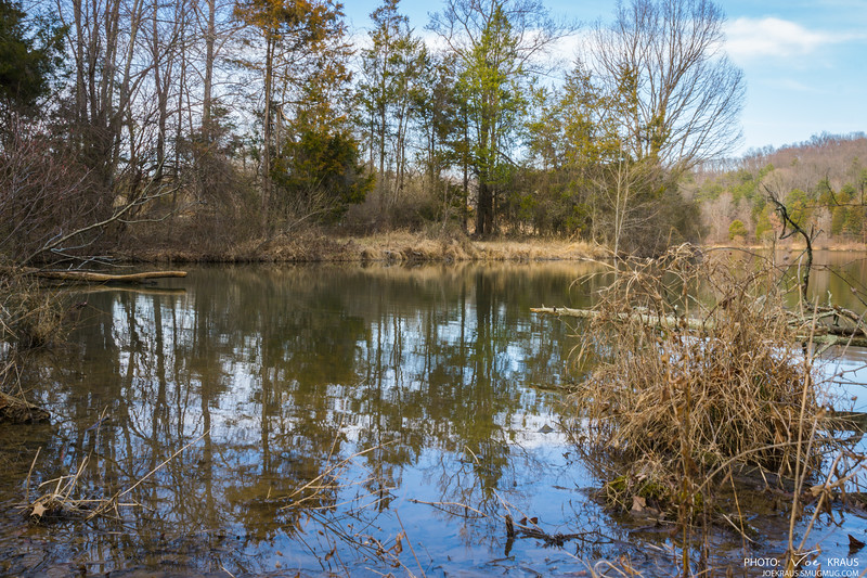 Pond Weeds