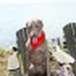 farley pups 108-2.jpg
