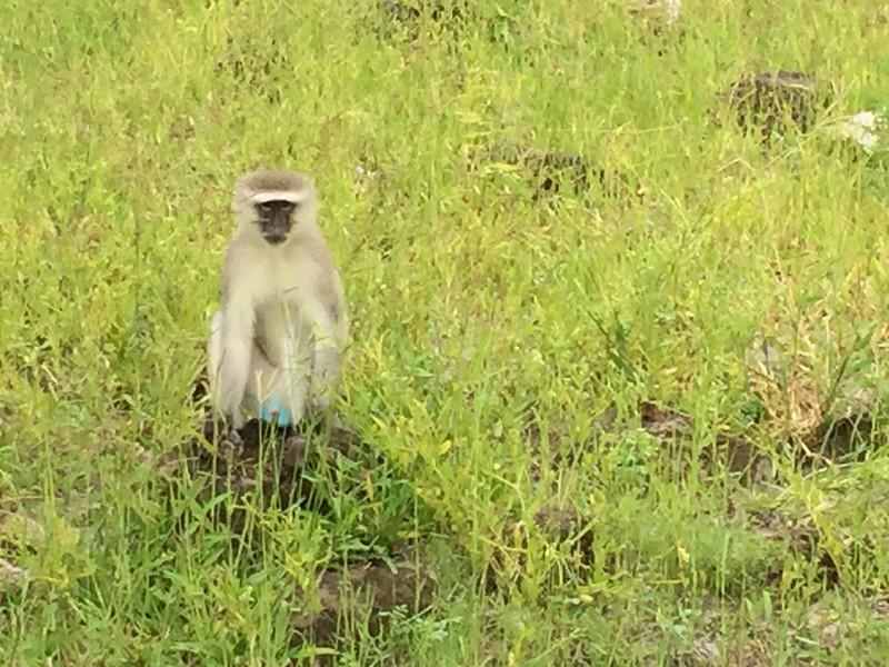 Wildlife on the Chobe River - Kristin Appelget