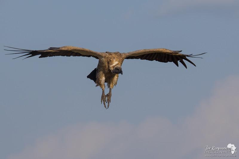 Vulture Landing