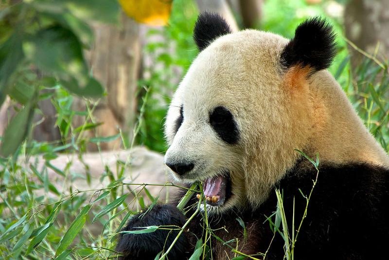 china 119.jpg