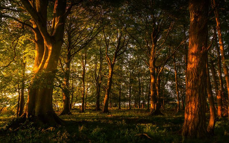 Forest Shadows-137.jpg