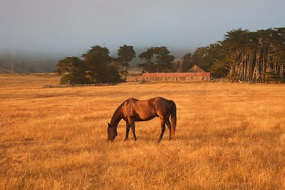 Mendocino, July 2014 (b14ga)