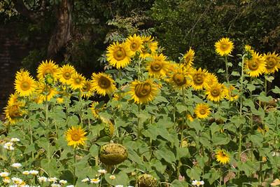 Flowers - Nature
