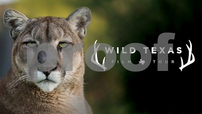 wild-texas-film-tour-coming-to-11-texas-cities