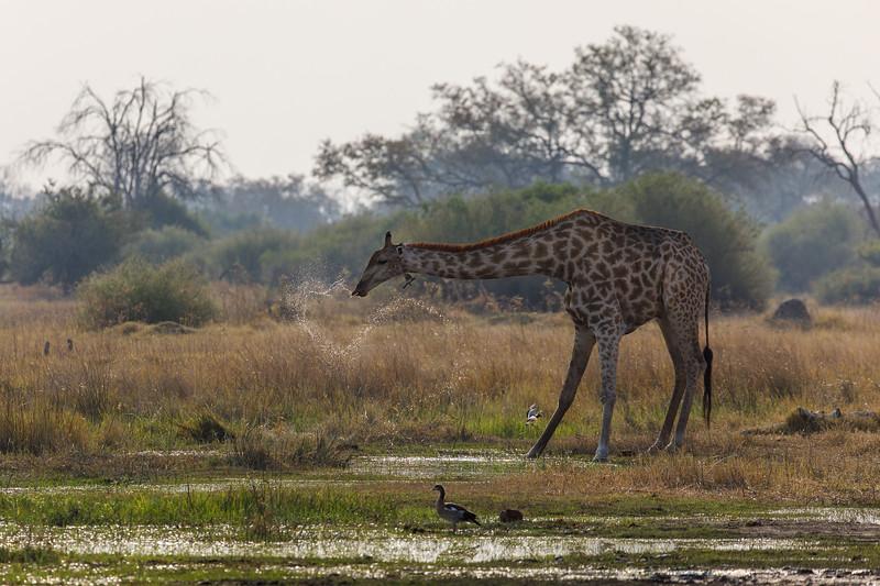 Botswana_0818_PSokol-1927.jpg