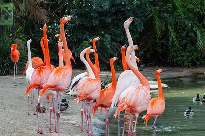 3.2020 San Diego zoo