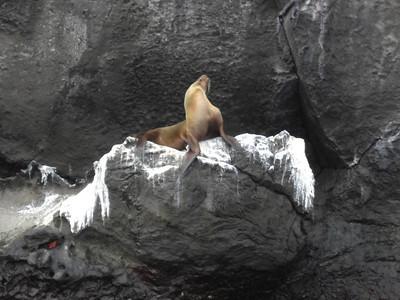 Ecuador - Galapagos - Day 7 - Genovesa Island - Trip 1