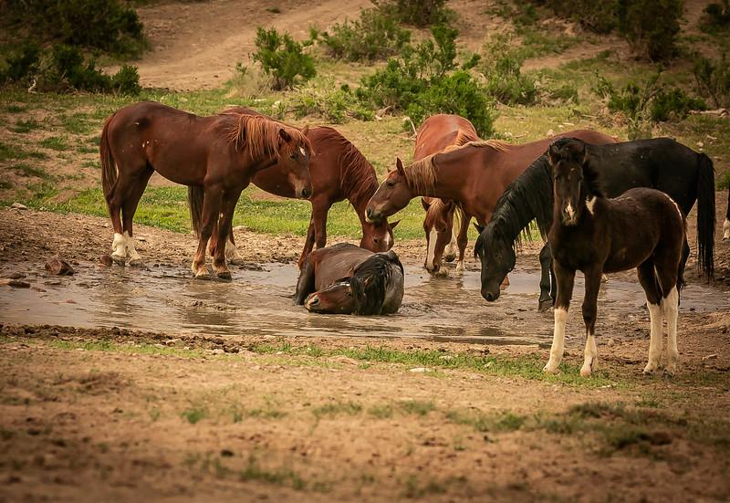 drinking and taking a mud bath.jpg