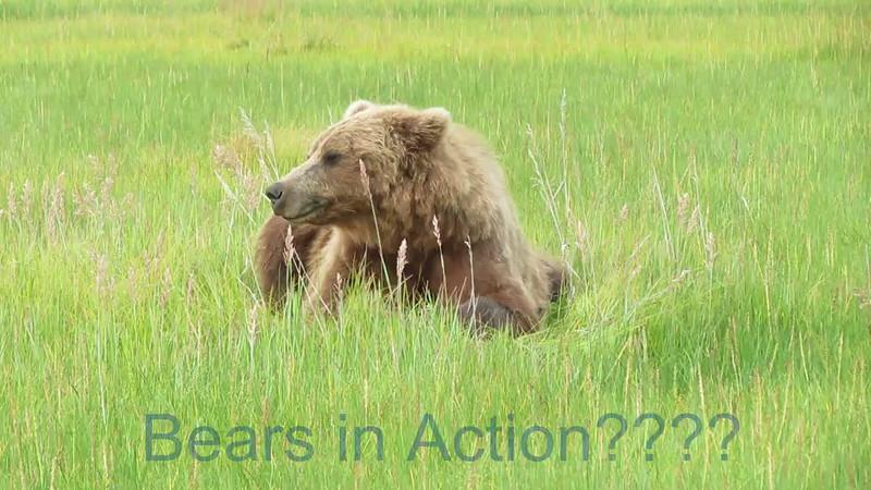 Alaska Wildlife Video