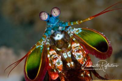 UNDERWATER HIGHLIGHTS - The Best of My Underwater Photography