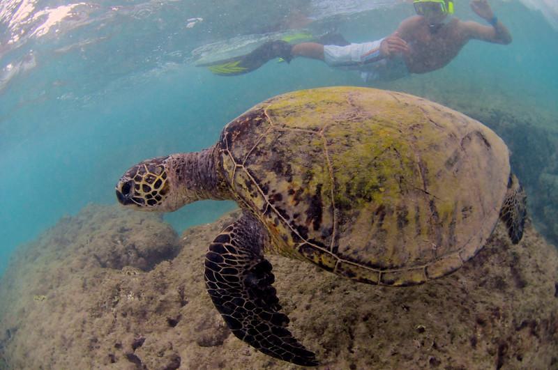 Hawaii - Hanauma Bay-24.JPG
