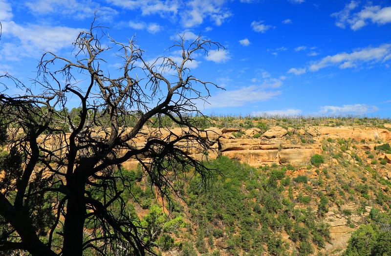 Mesa Verde IMG_5284.jpg