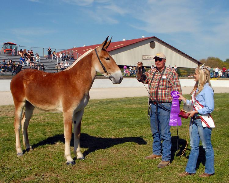 2015 Draft Mule