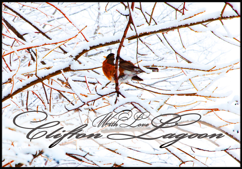 bird love.jpg