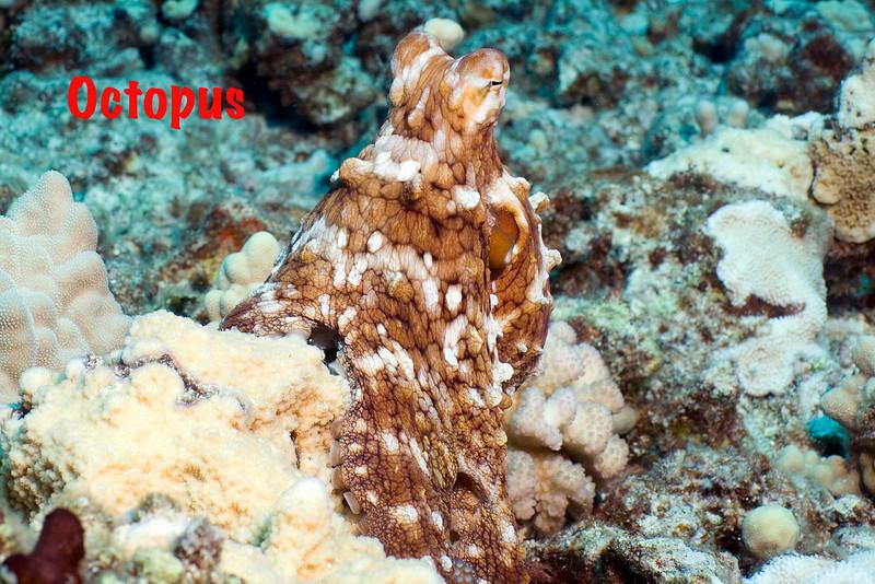 Octopus 1.jpg