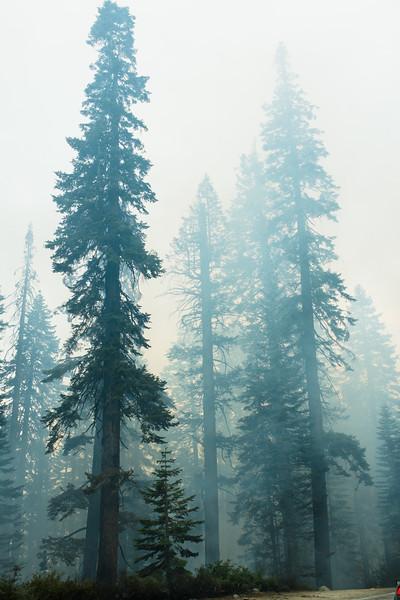 Yosemite2017-362.jpg