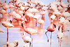 Abstract photograph of a group of flamingos wading in the water.