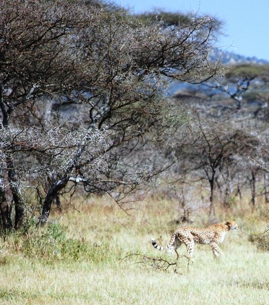 Serengeti (149).JPG