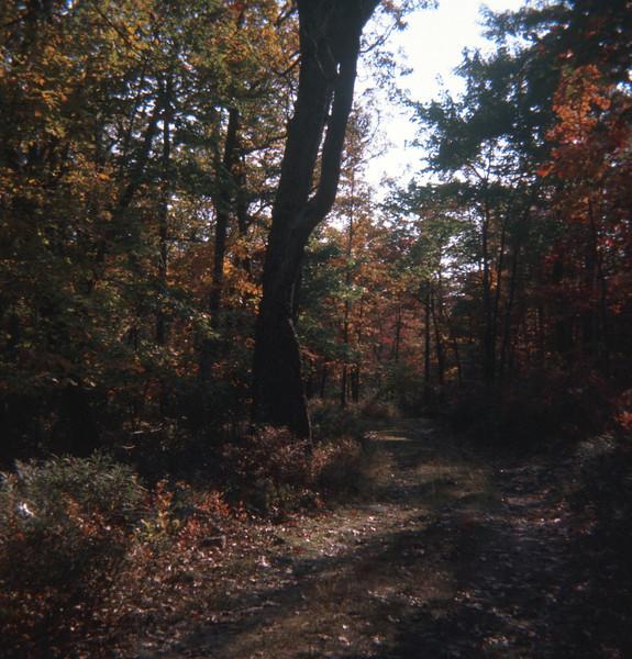 Path to Sunfish Pond New Jersey