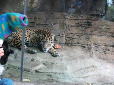 Kleiner Tim im Zoo