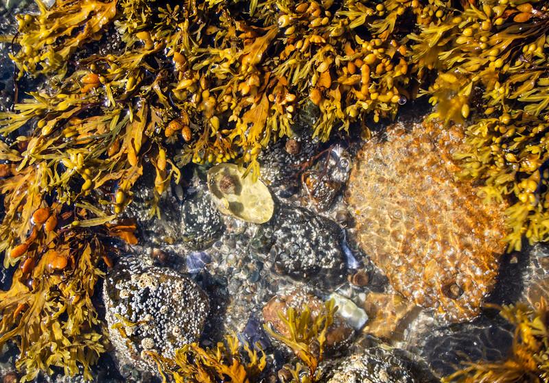Maine-Acadia-shoreline-rocks3.jpg