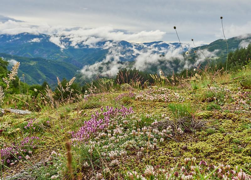 Bulgarian mountain flowers