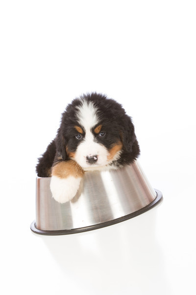 2013-Pearson Pups-Jun02-0376.jpg