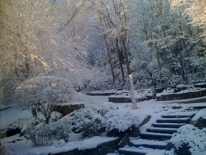 first snow 2009 (5)